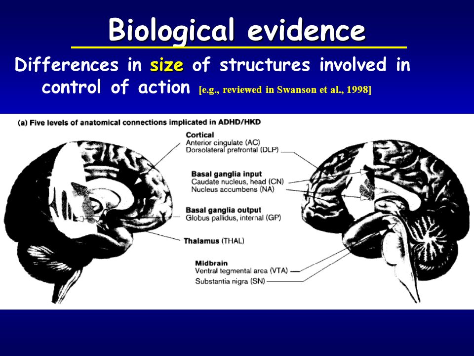 Biological evidence Differences in size of structures involved in control of action [e.g., reviewed in Swanson et al., 1998]